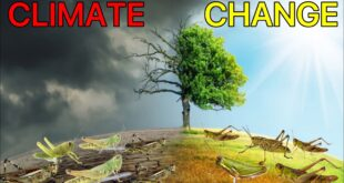 Climate Change Linked to Locust Attacks in Different Parts of the World | General Knowledge