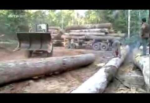 Deforestation de l'Amazonie