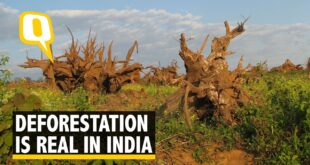 Deforestation is Real and India is Reeling Under it