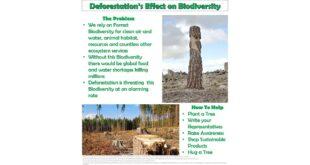 HCC Earth Day | Deforestation