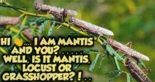 How Locust attack | Spawns of Locust | Detail of Locust