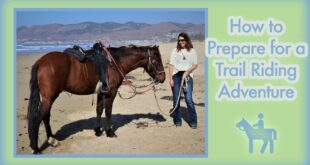 How to Prepare for a Trail Riding Adventure