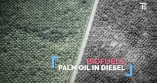 Palm oil, biofuels and deforestation: are they linked?