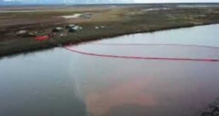 Russia Oil Spill News | Russia races to clean the massive oil spill in Siberia